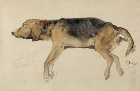 Sir Edwin Henry Landseer, 1802–1873, British, Study of a Dog Lying Down, 1860, Oil on canvas, Yale Center for British Art, Paul Mellon Collection