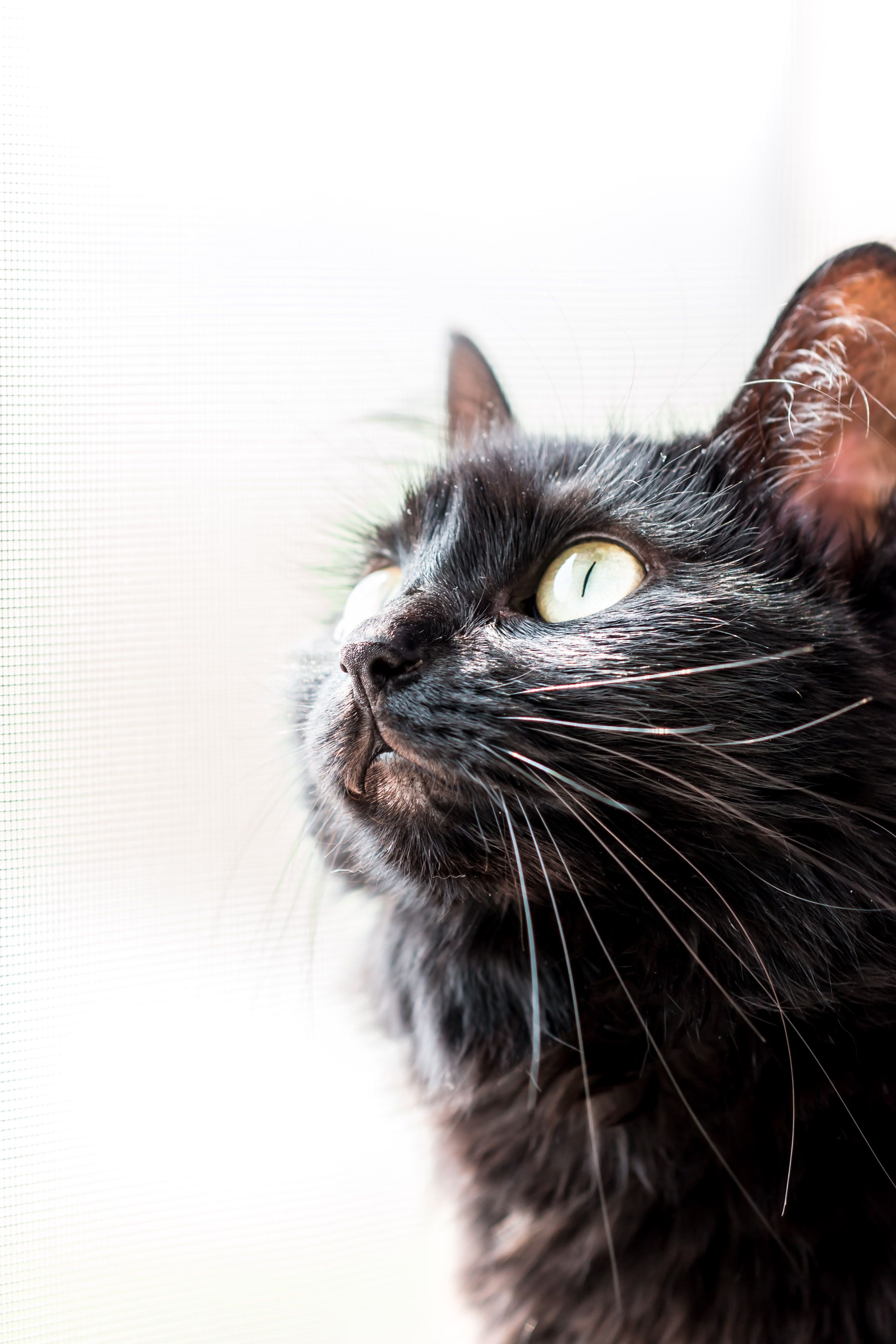 Kalhi 2020 03 In 2020 Geraniums Animals Cats