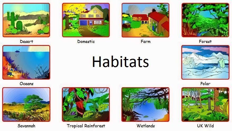 Animals and Habitats by Laura | Habitats, Animal habitats, Animals