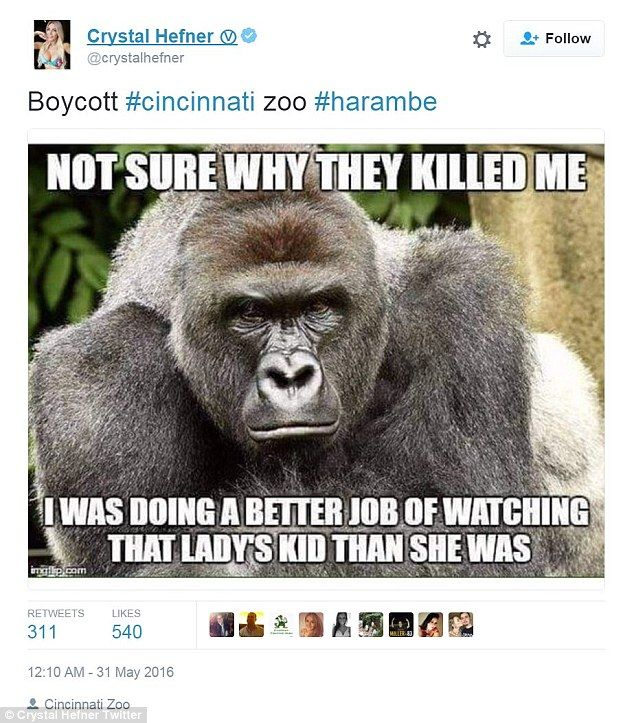Funny Zoo Meme : Kaley cuoco and ricky gervais lead tributes to harambe the