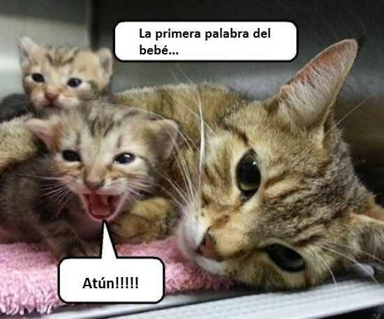 Pin De Nora Nardacchione En Gatitos Una Siesta Calentita Imagenes Divertidas De Animales Gatitos Divertidos Meme Gato