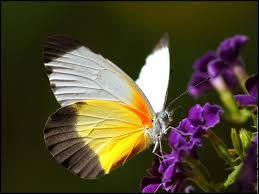 Imagen Relacionada Schmetterlinge Butterfly Beautiful