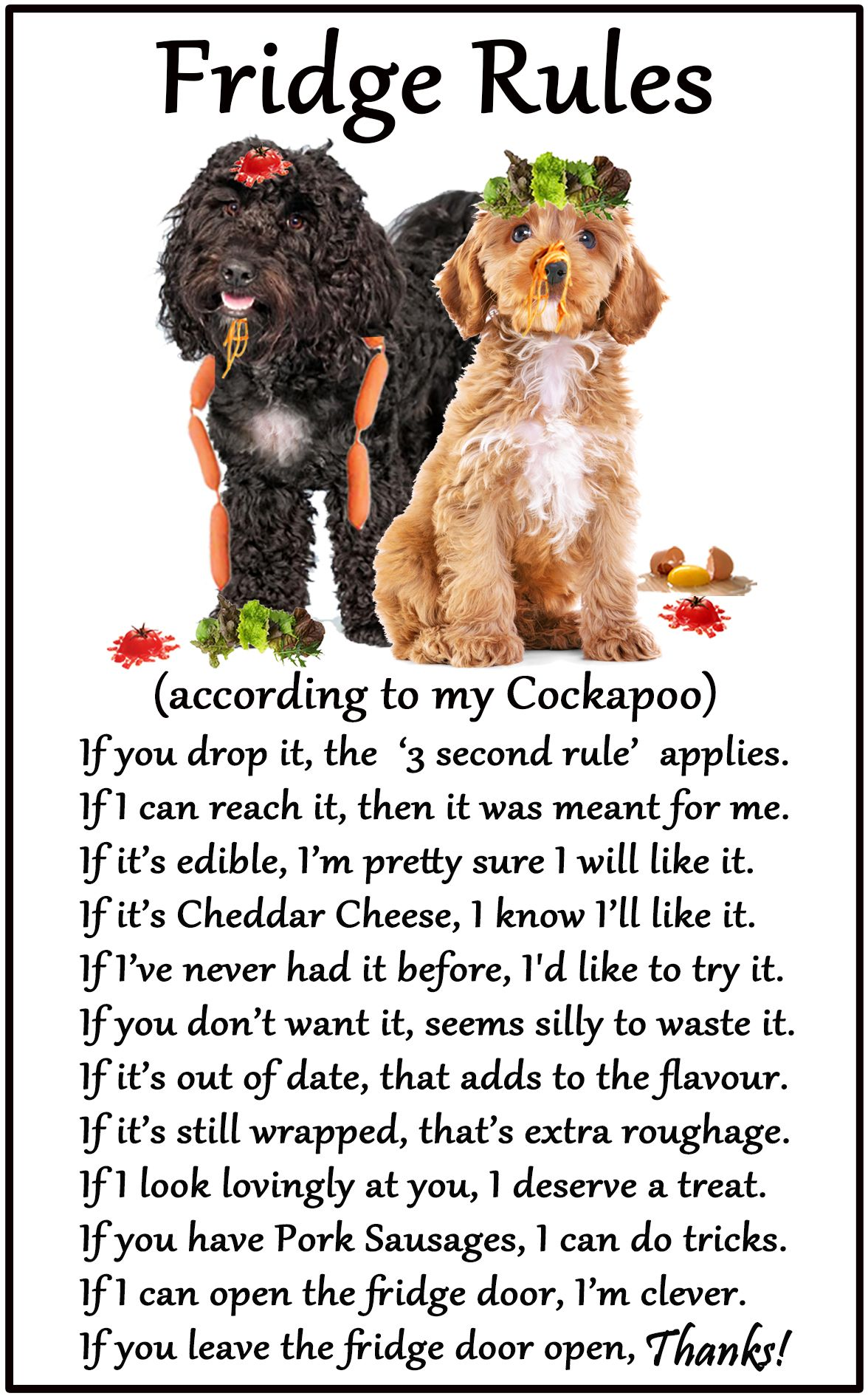 Cockapoo Humorous Magnetic Dog Fridge Rules Size 6 X 4 Available From Www Car Pets Co Uk And Www Amazon Co Uk Cockapoo Funny Dogs Dog Breeds [ 1890 x 1176 Pixel ]