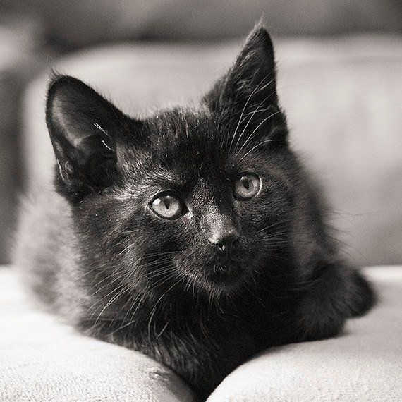 Pin By R2 On ️ Cats Black Beauties Kittens Cutest