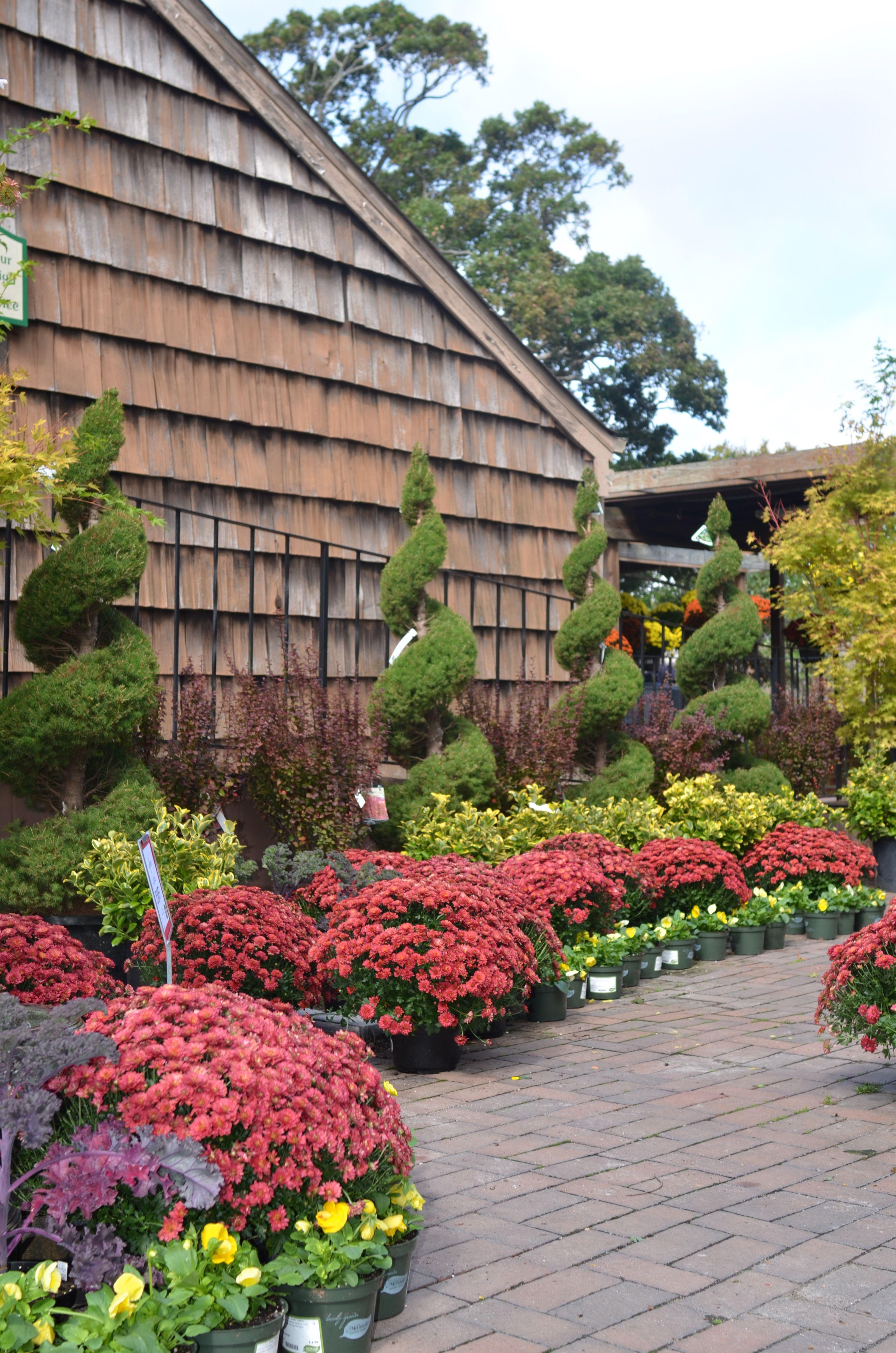 Merveilleux Fall Plants McDonald Garden Center, Virginia Beach