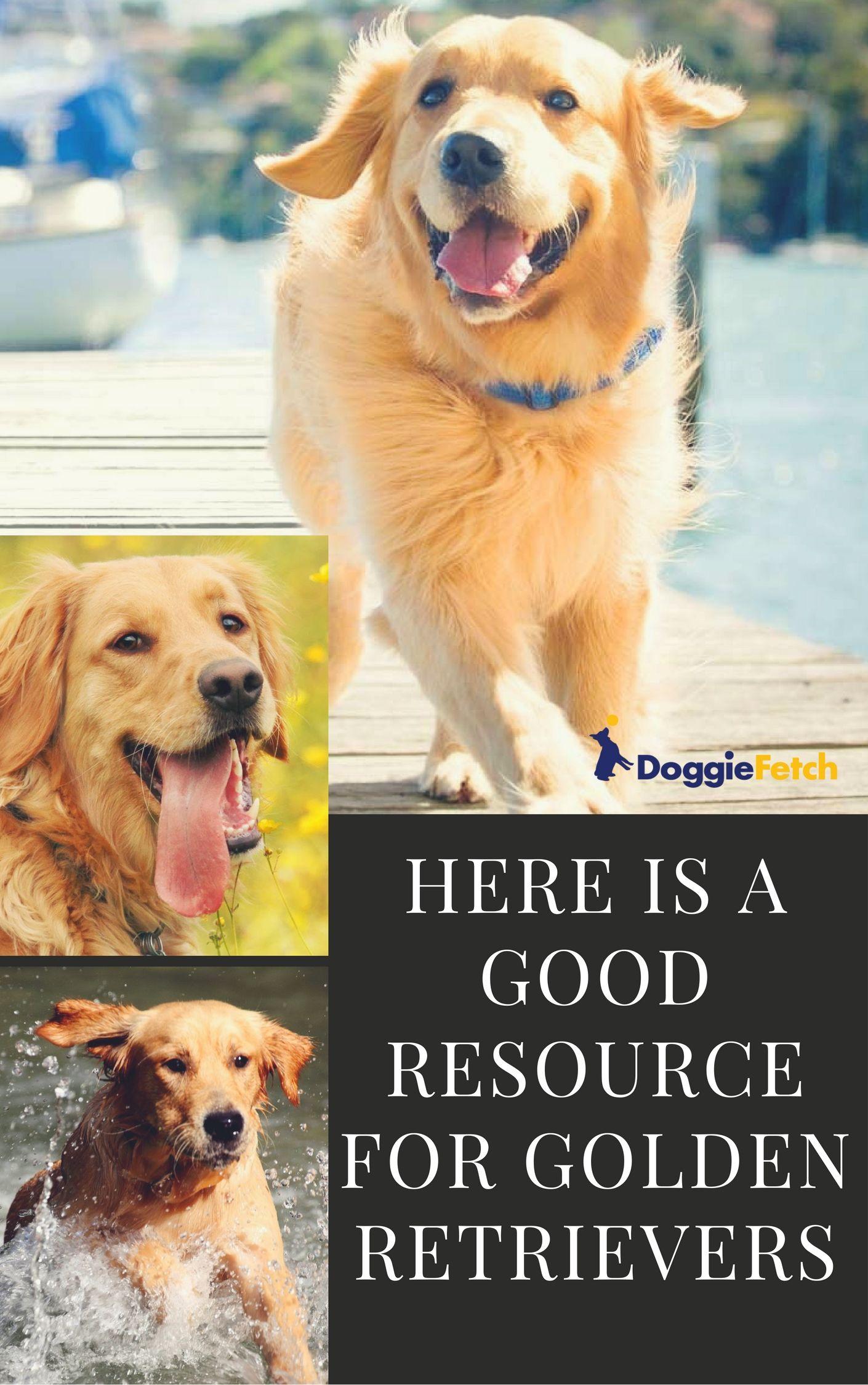 5 Best Frisbee Dog Breeds Of 2018 Dogs Golden Retriever Dogs