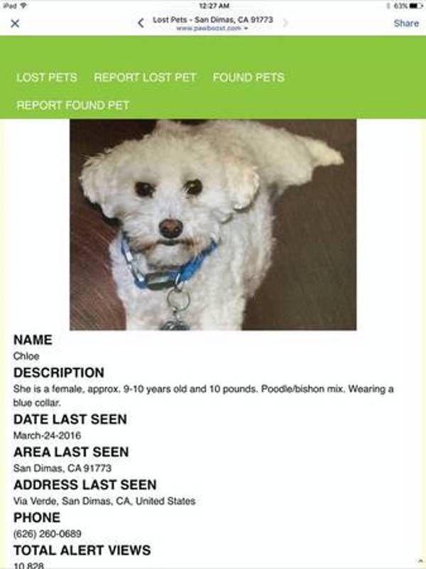 Lost Dog Poodle In San Dimas Ca Lostmydoggie Com Losing A Dog Pet Names Dogs