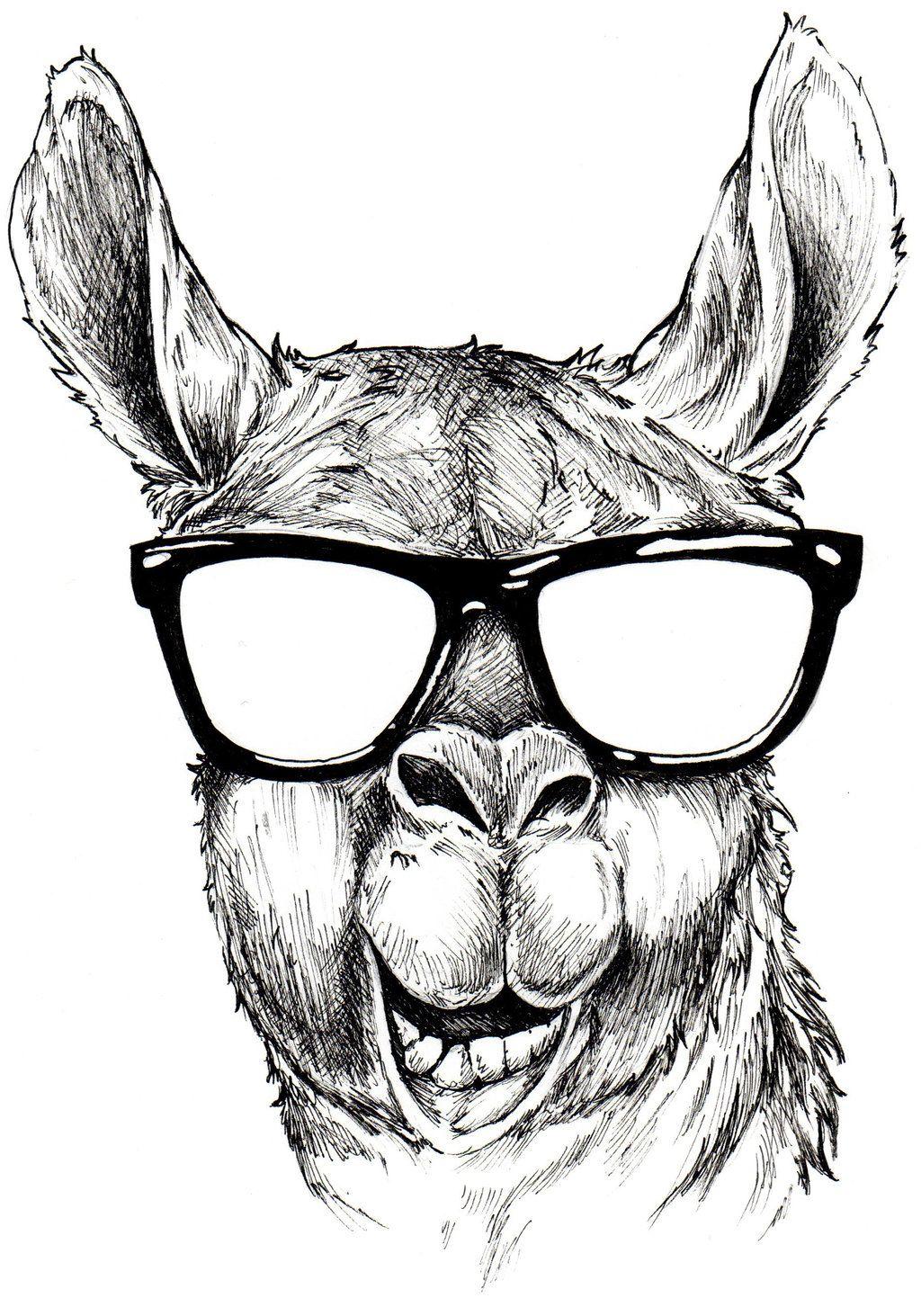 Hello Llama By Shangaililyviantart On Deviantart