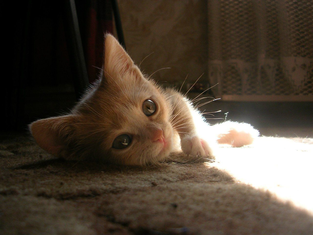 Pin On Kittens Meowing