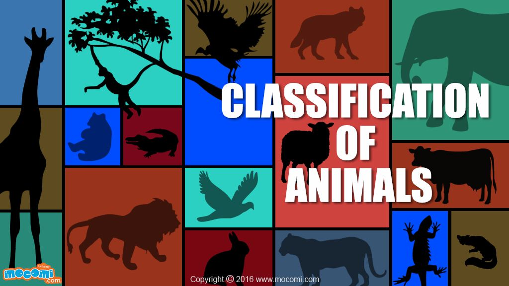 Classification Of Animals Gk For Kids Mocomi Animal Articles