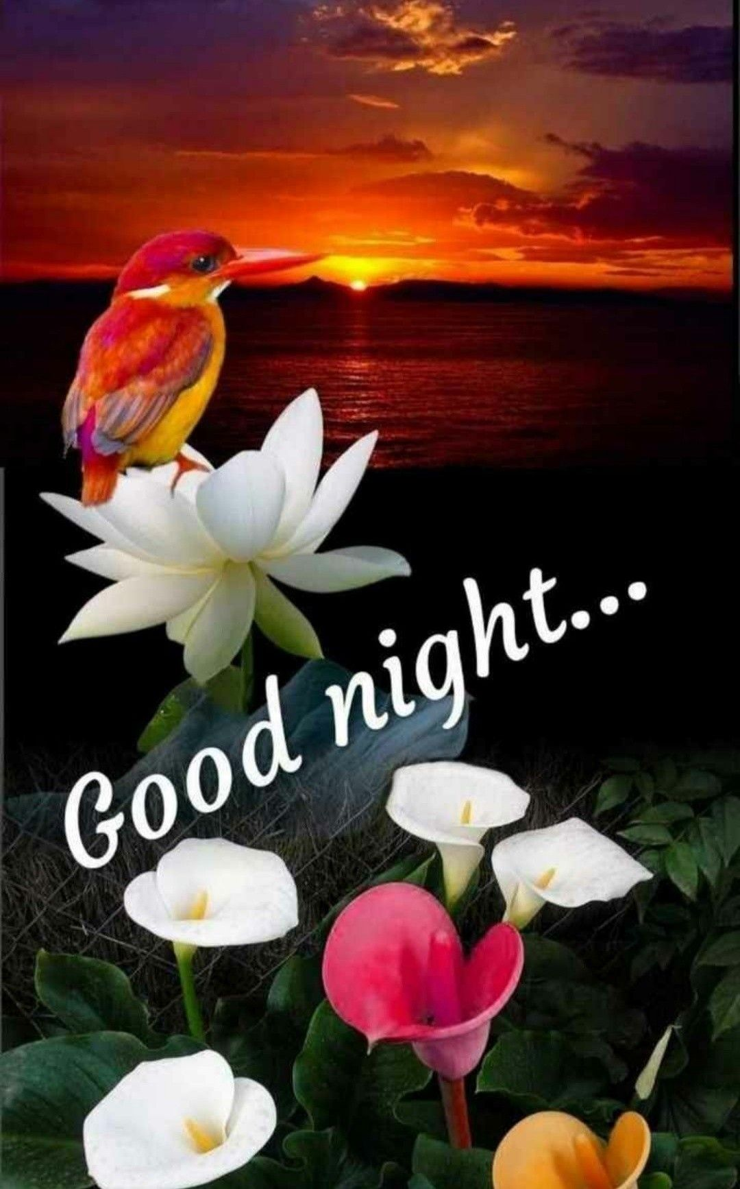 Gold Night Good Night Flowers New Good Night Images Good Night Love Images