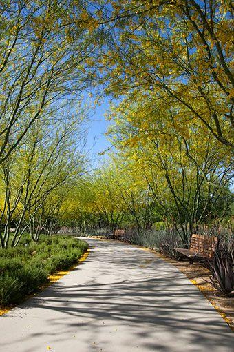 Sunnylands Garden Jardin Pinterest Jardín mediterráneo