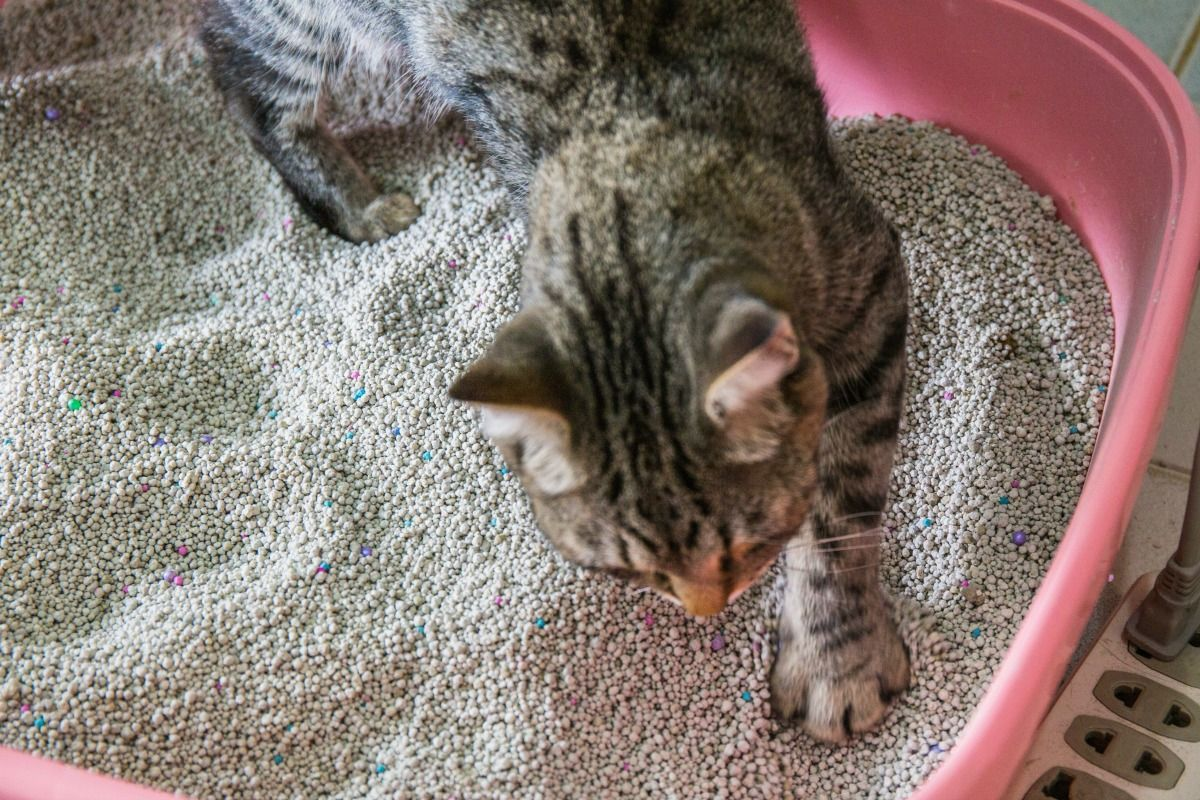 Cat Urine Out Of Couch How To Clean Cat Spray On Walls,how To Get Cat Urine  Odor Out Of Carpet How To Get Rid Of Cat Pee On Carpet,how To Remove Cat ...
