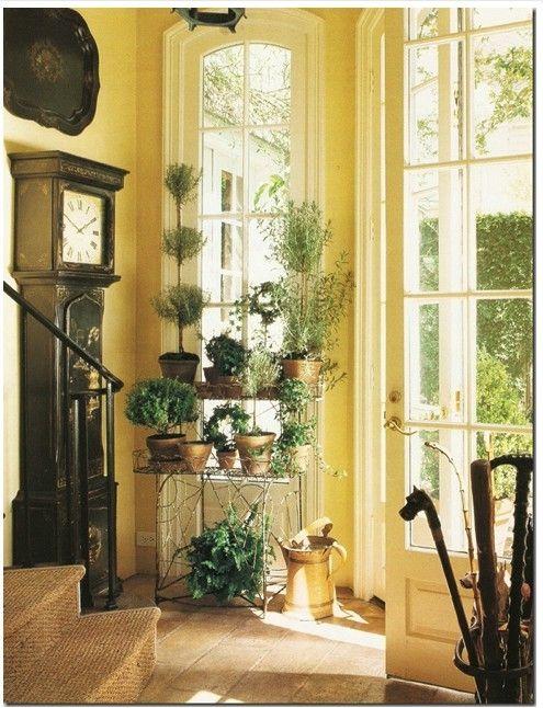 wall color decor Pinterest Plantas interior, Plantas y Amarillo - decoracion de interiores con plantas