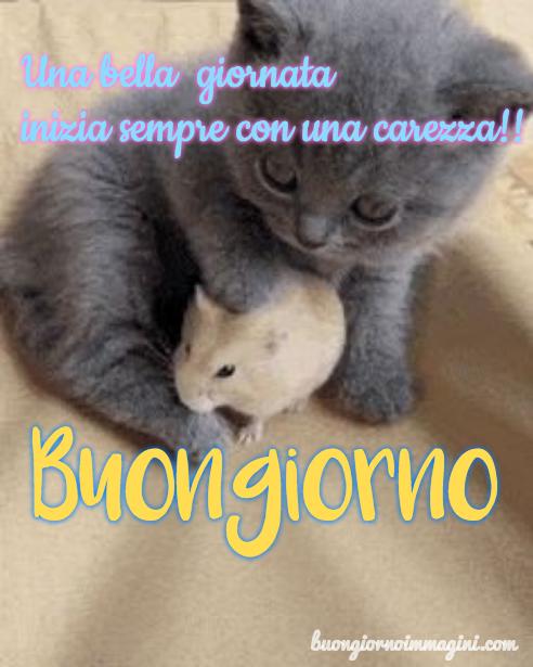 Gattino Grigio Tenero Cucciolo Criceto Immagini Foto Nuove