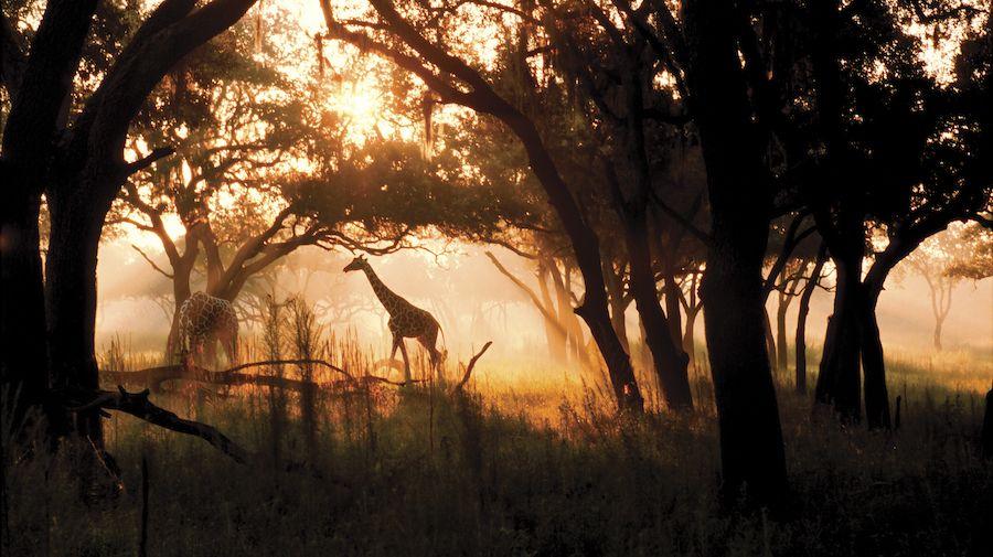 Night time safari Animal Kingdom