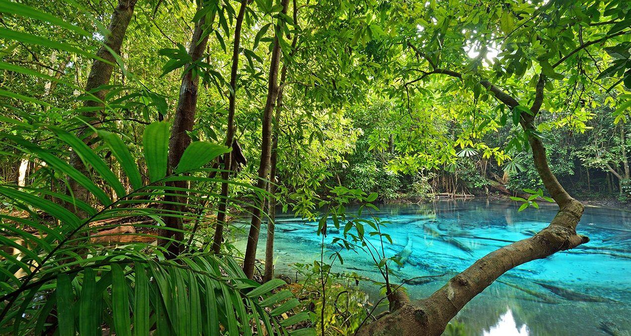 Tropical Island Dschungelcamp