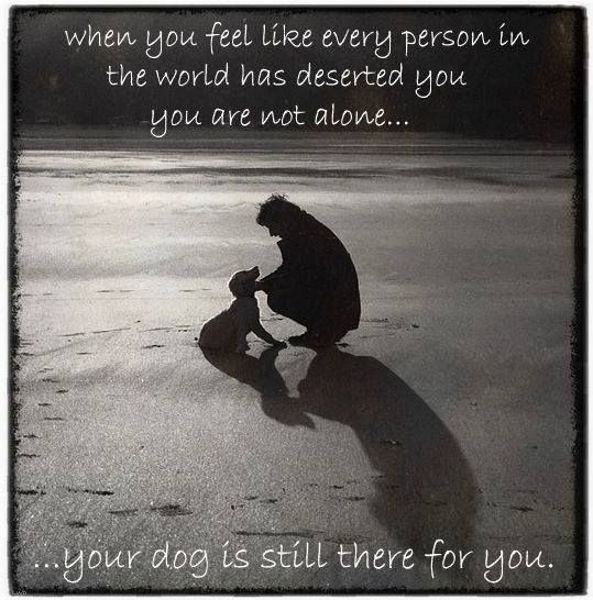Quotes About A Girl And Her Dog You Are Never Alone When You Have A Dog Animals  Pinterest  Dog