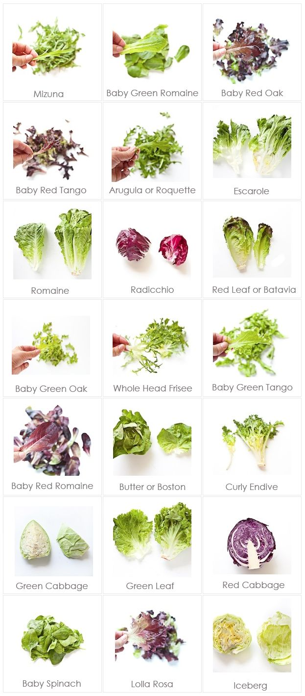 Leafy Greens For Your Edible Garden Types Of Lettuce Types Of Salad Cooking Guide