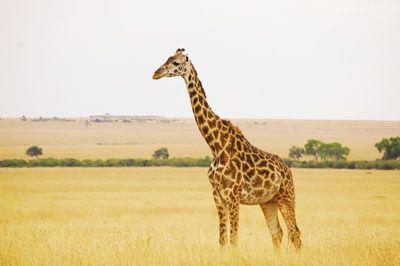 Pin On Zoo Habitats