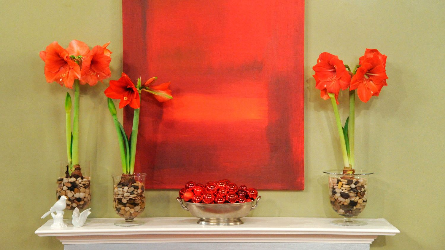 How to Plant and Care for Amaryllis Amaryllis bulbs