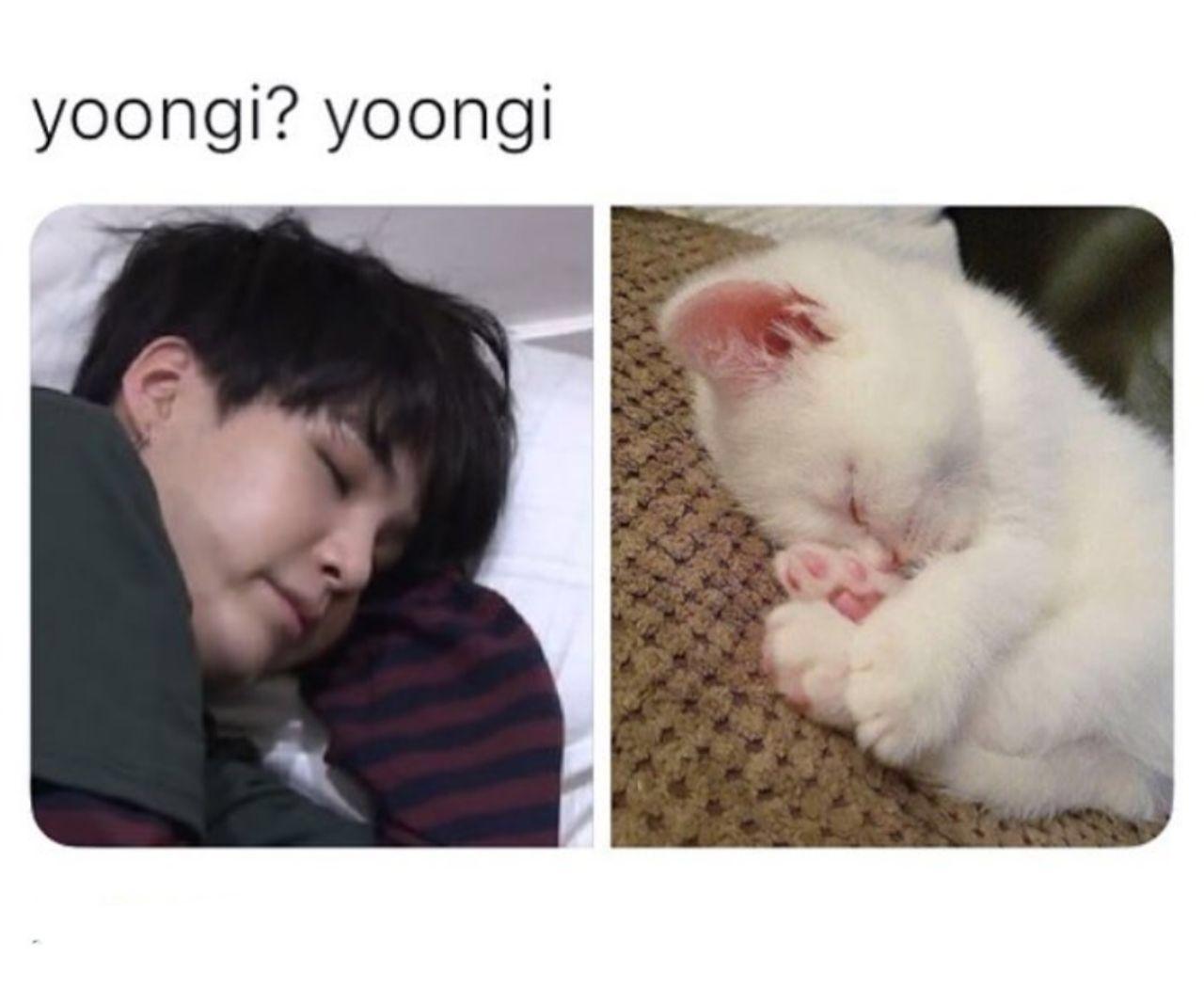 Minyoongi Yoongi Suga Cat Kitten Bts Bangtan Cute Yoongicute Sugacute With Images Bts Funny Bts Yoongi Suga Funny