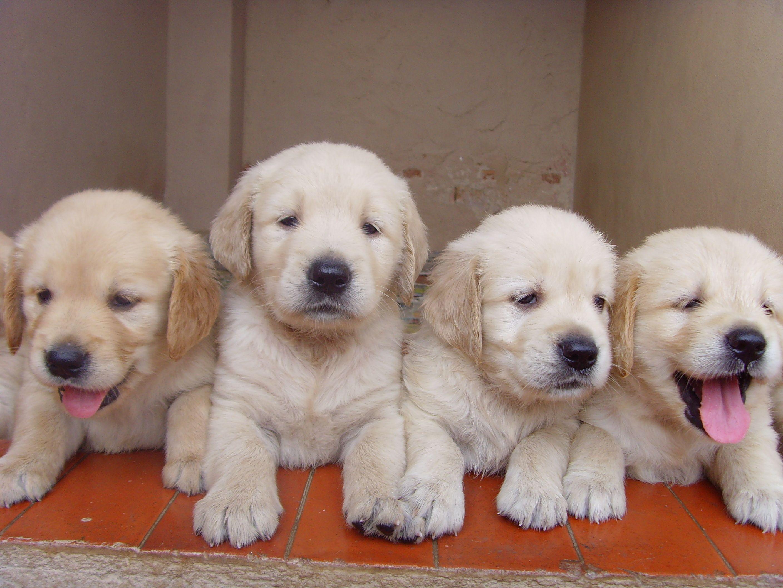 Puppy Training Classes Houston Newborn Puppies Puppies Puppy
