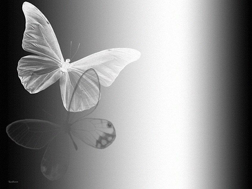 Imagina el sensible aleteo de una bella mariposa, su sensibilidad ...