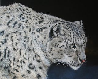 "Sevina Yates Fine Art ""Focus ""  oil on canvas . Snow Leopard painting. Wildlife art ."