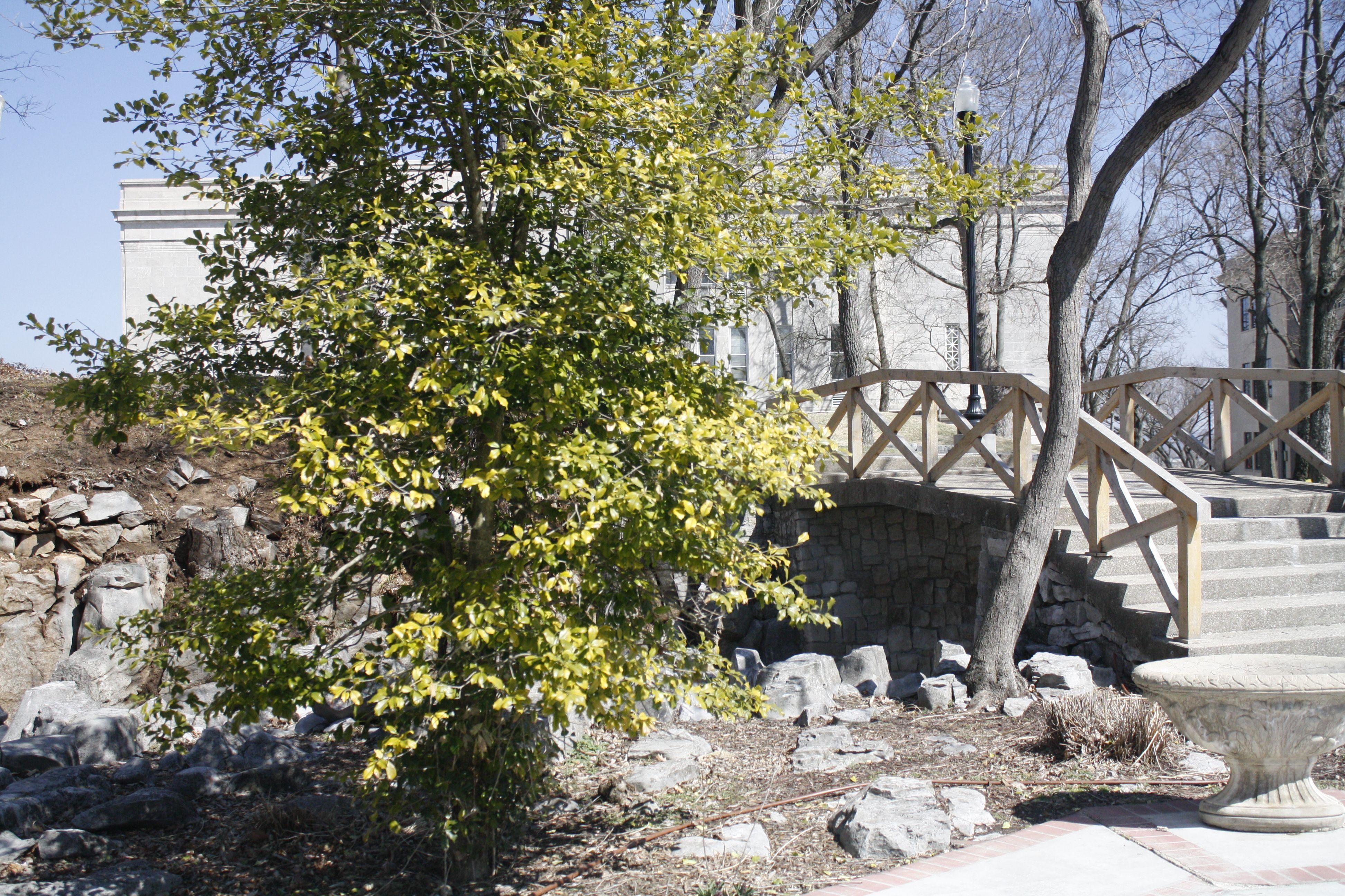 The Kissing Bridge On Top Of The Wku Hill Wedding Pics