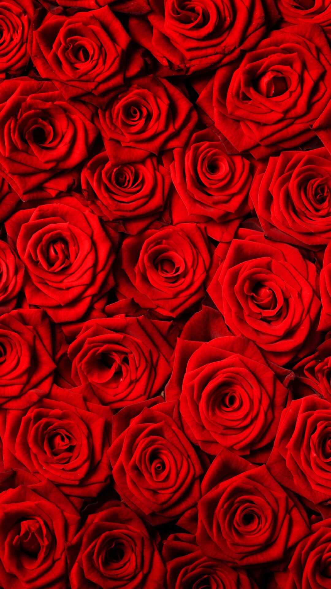 Pin By Selva Zamanzadeh On Roses Wallpaper 1 Red Roses Wallpaper Rose Wallpaper Red Roses
