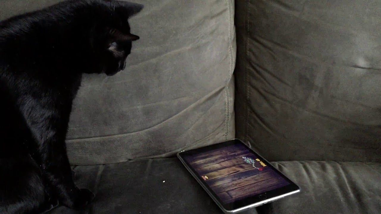 Ipad Addict Cat Boo Cat Playing Cat Mouse Cats