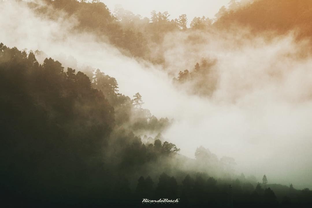 #landscape #nature #canon #sigma #photo #forest #canarias #islascanarias #tenerife by ricardobosch