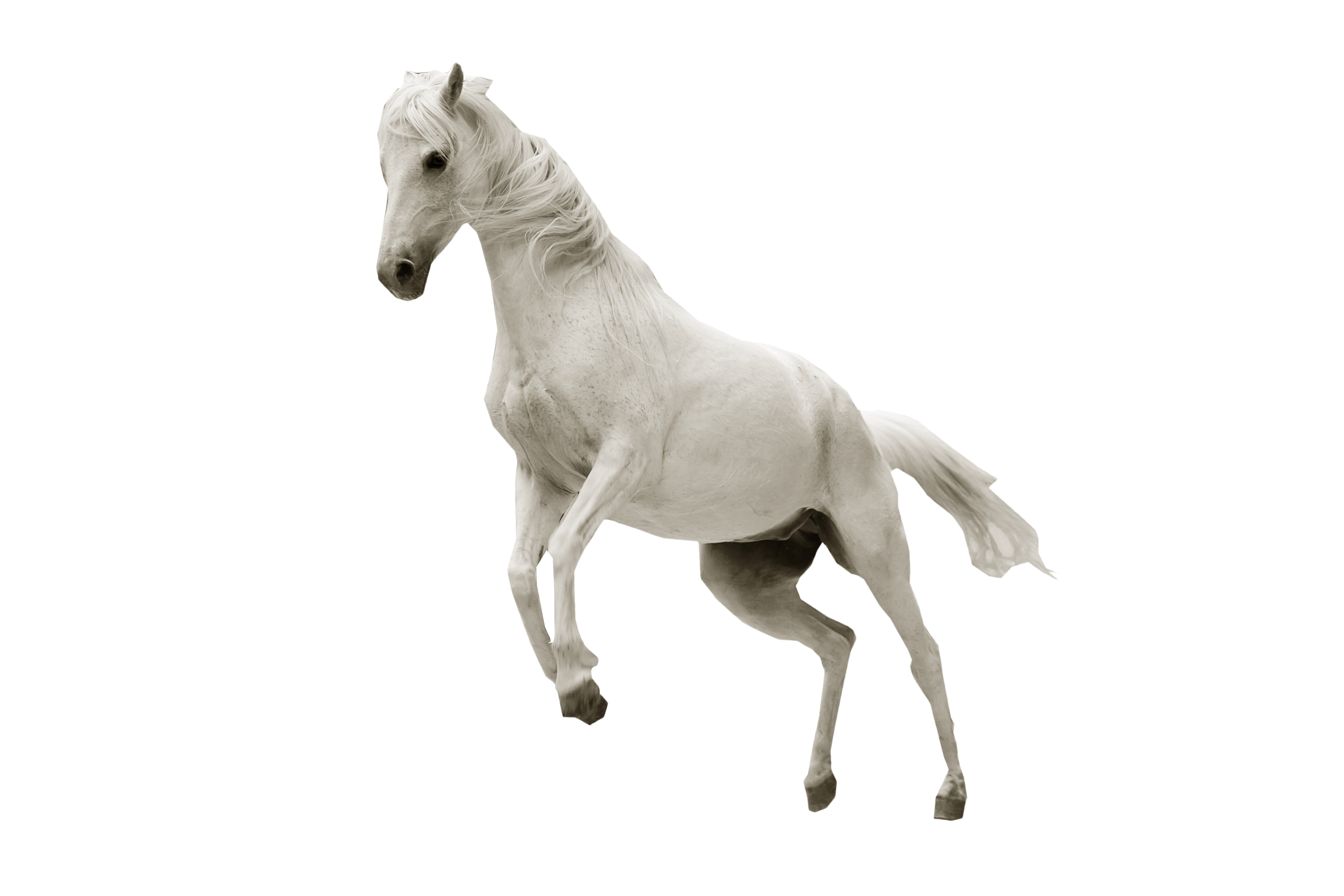 White Horse Jumping Png Image White Horse Horse Jumping Horses