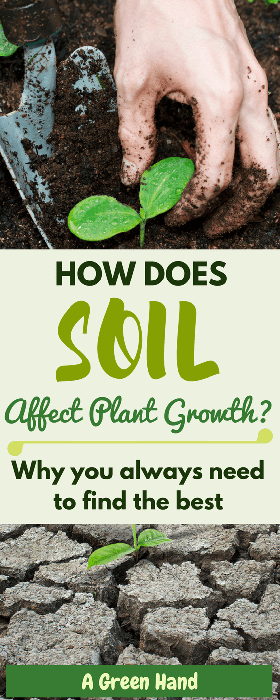 ca9b8d38b85e5121203b57c2330a16f5 - How Does Ph Affect Plant Growth And Gardeners Gardens