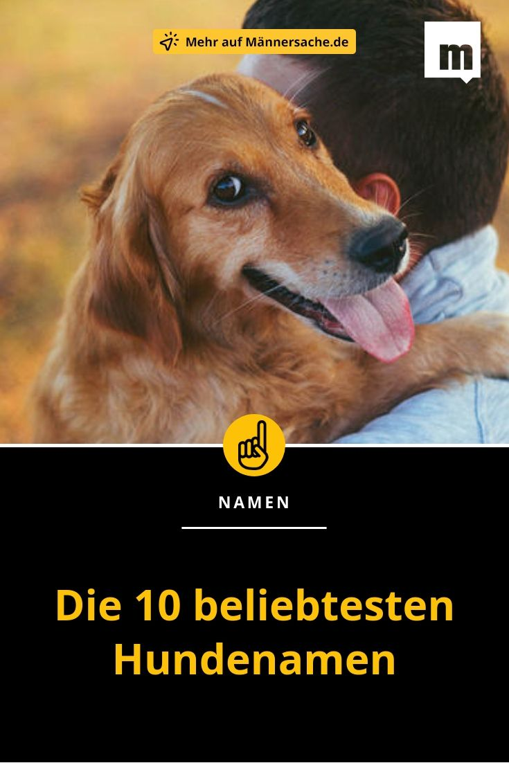 Hundenamen Beliebt