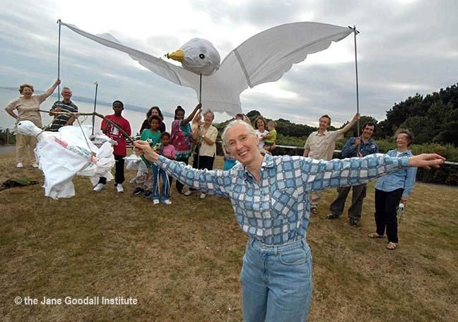 Jane Goodall with Giant Peace Dove Puppet - On September 21st of every year, the International Peace Day, people around the globe express their desire for a world where war and violence are things of the past and we live in harmony with the natural world. The Giant Peace Dove puppets  are a symbol and celebration of this yearning for peace. http://www.scribd.com/doc/238343932/Jane-Goodall-s-Roots-Shoots-Giant-Peace-DovePuppet#