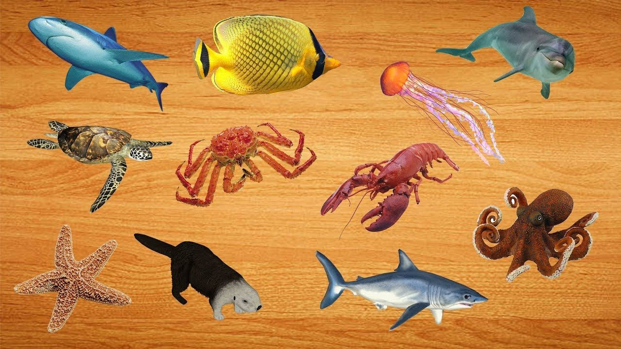 Learn Sea Animals Names, Wrong body Sea Animals Water