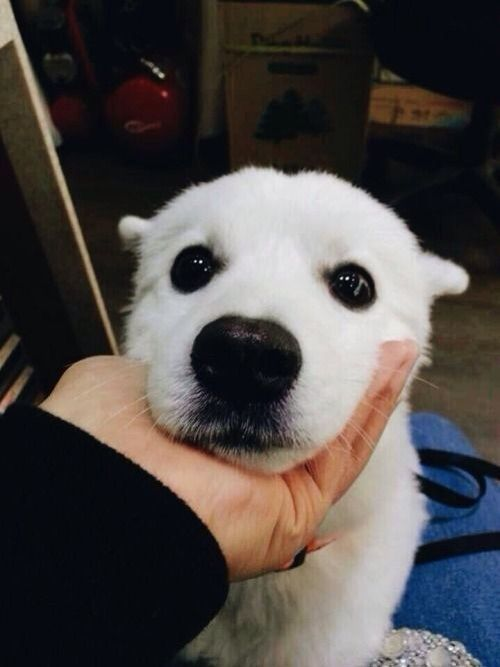 Bangtan Pets K Pop Amino Bts Dogs Doggy Pets