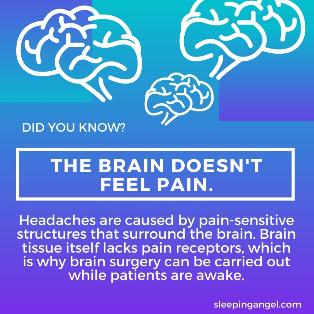 Pin On Did You Know