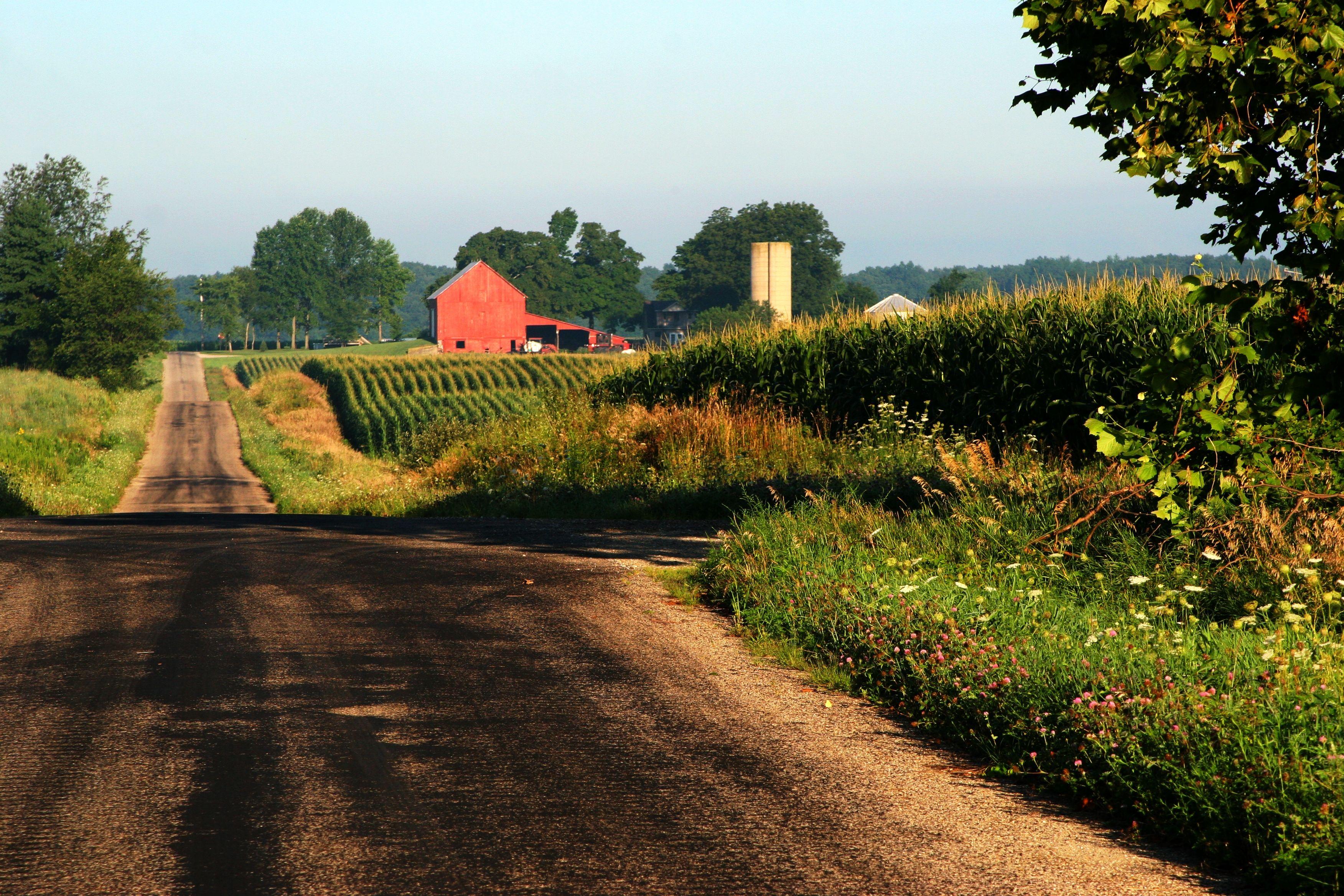 dirtpatch farm cornfield ordinary
