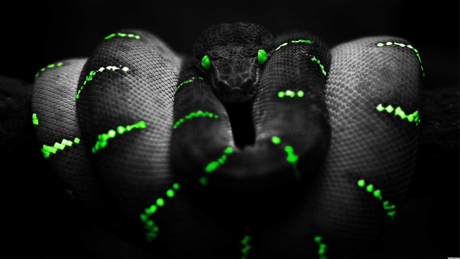 Snake Reptile Digital Art 1920x1080 Snake Ultra Hd 4k 1080p