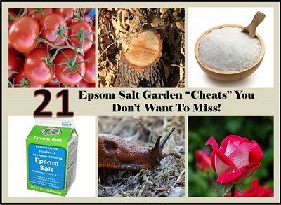 Recipes Projects More 21 Epsom Salt Garden Cheats You Don T Want To Miss Garden
