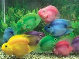 Aquacare February 2013 Parrot Fish Fish Cool Fish