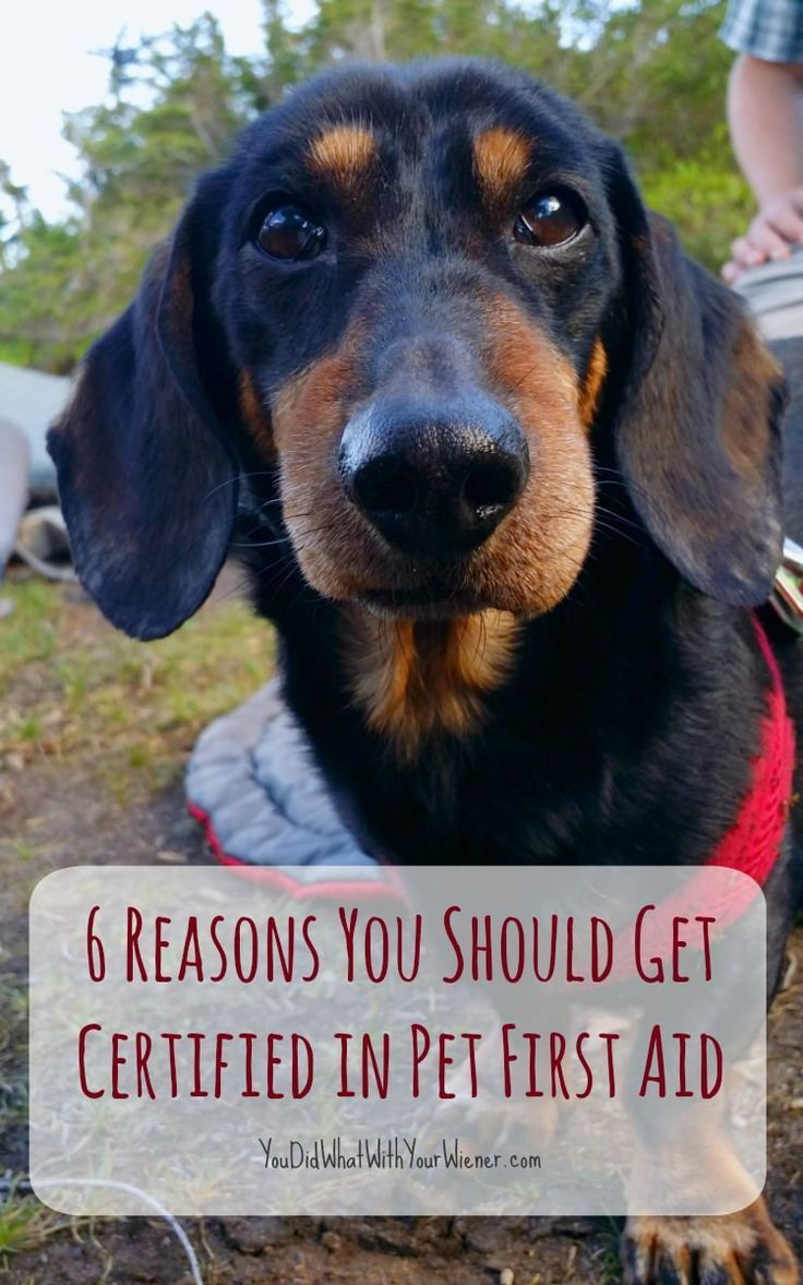 6 Reasons You Should Get Certified in Pet First Aid (With