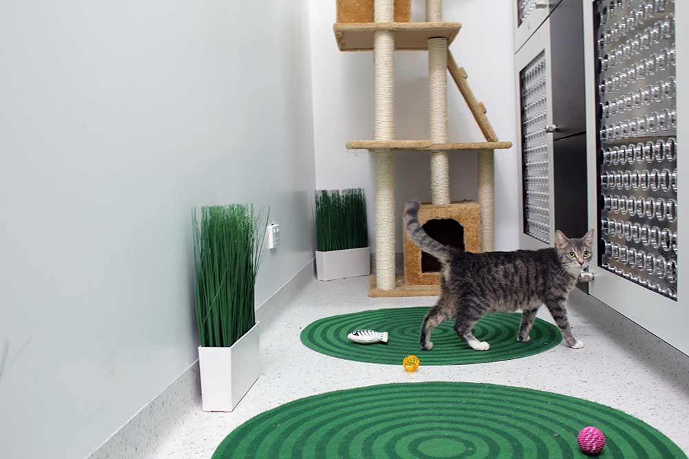Cat Boarding & Luxury Cattery in Melbourne Northcote Vet