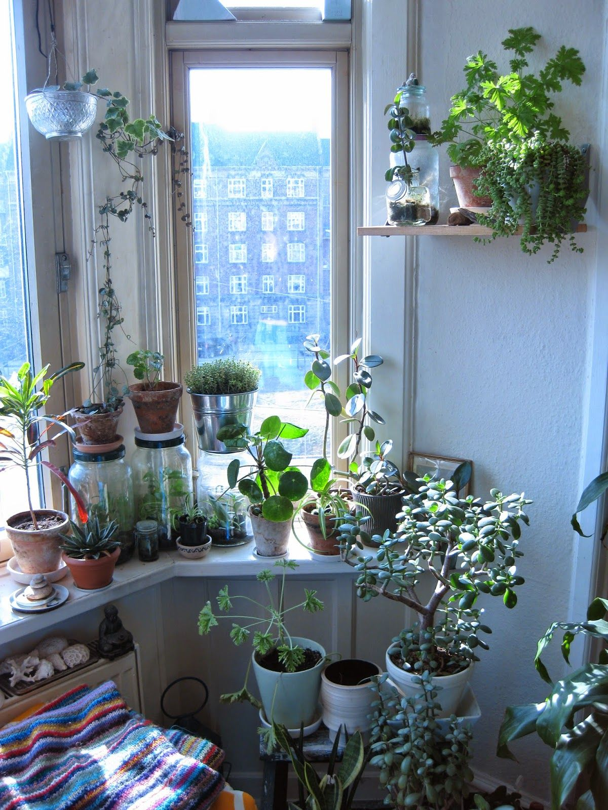 a kitchen bursting with houseplants | FLOWERS - nature, plants ...
