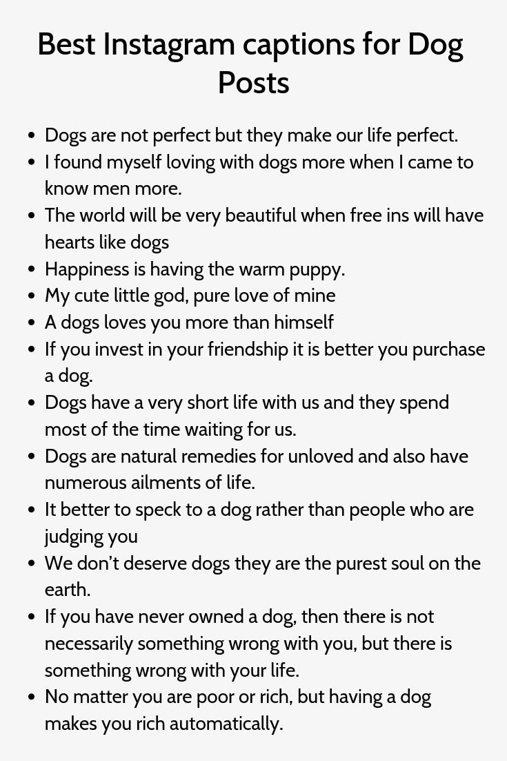 Best Instagram Captions For Dog Posts Good Instagram Captions Instagram Quotes Captions Dog Instagram Captions