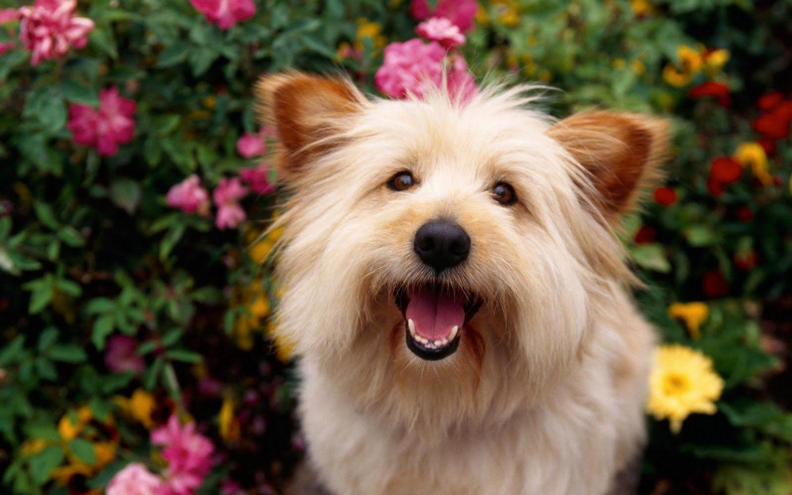 www.JoseLuisAvilaHerrera.Blogspot.com - Fotografías de perros y cachorros 44
