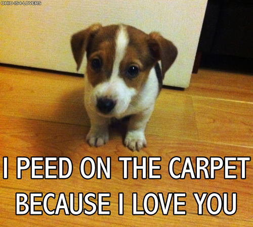 Yeah Sure You Go Clean It Up If You Love Me So Much Silly Dogs I Love Dogs Funny Animals